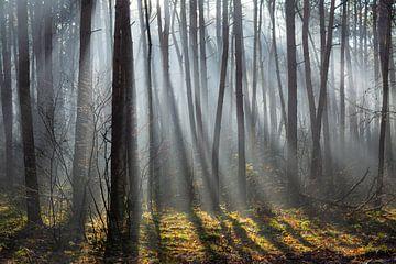 Un mur d'arbres où brillent les rayons de soleil sur Michel Geluk