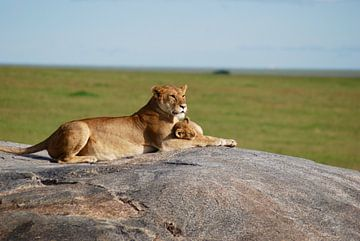 Loekie de leeuw sur Paul Riedstra