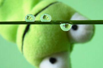 Vert Froggy, grenouille verte dans des gouttelettes d'eau sur Inge van den Brande