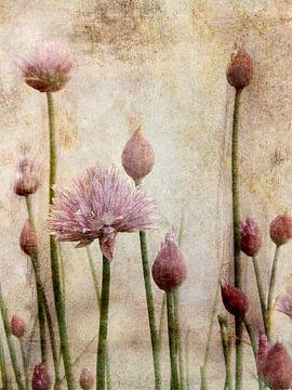 Fleurs et bourgeons de ciboulette sur Claudia Gründler