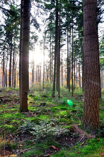 Zonneschijn in bos van Vladimir Neski