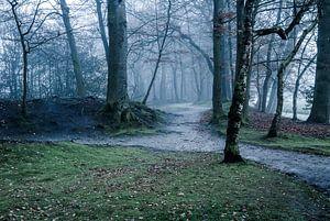 Het myserieuze bos van