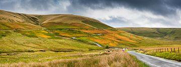 Weg durch die gelb gefärbten Hügel von Wales. Großbritannien von Rietje Bulthuis