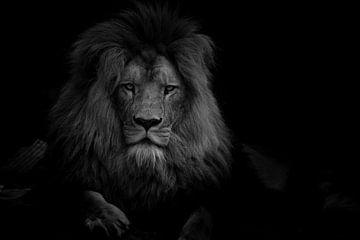 Porträt des majestätischen Löwen - Schwarz und Weiß von Jesper Stegers