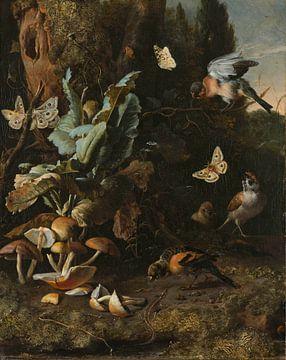 Dieren en planten, Melchior d'Hondecoeter van