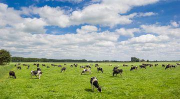 Een kudde koeien staat in het landschap van Groningen van Marc Venema