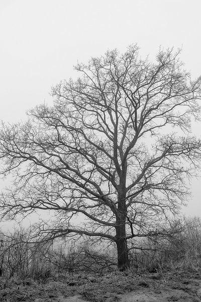 Boom in de mist van Westerhof.JPG