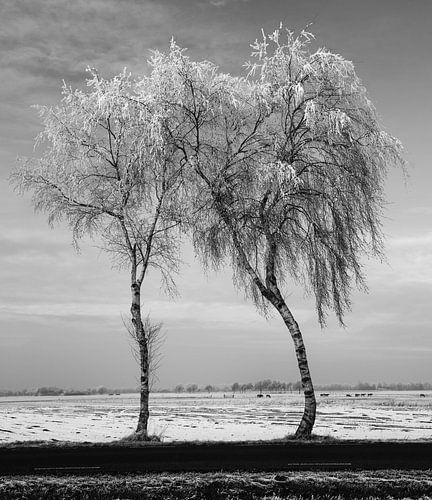 Trees #2 van Anne Koop