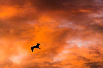 Fly Away Natuurfotografie Naturefotografie Naturfotografie von Coby Zwartbol