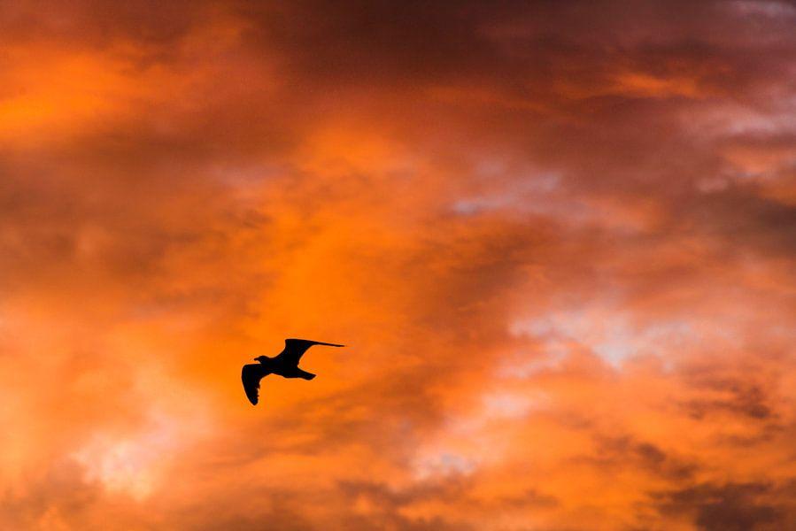 Fly Away van Coby Zwartbol