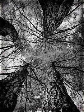 Vier bomen von Karin Stuurman