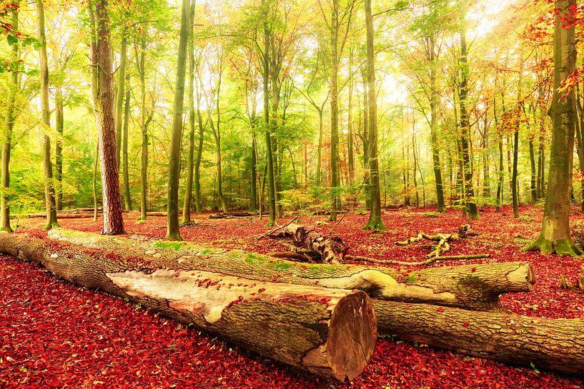 Herfst - Beautiful Death van Cho Tang