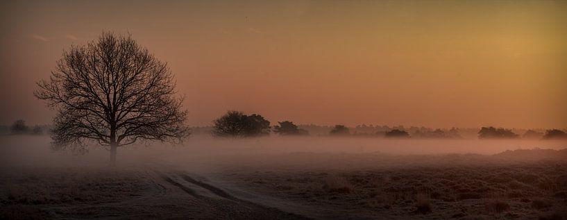 A stuning sunrise with fog in the heathery sand dunes in Appelscha van Luis Fernando Valdés Villarreal Boullosa