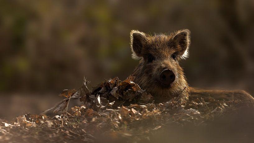 Wild zwijn van Yvonne Kruders