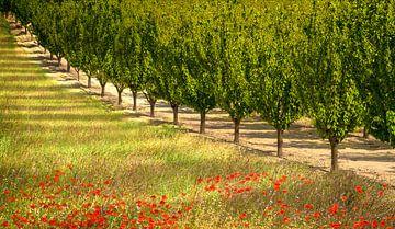 Provence II van