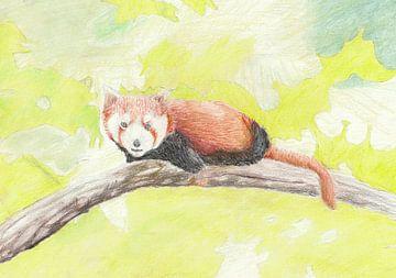 Kleiner Panda von Jerzy Beerepoot