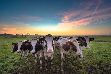 These cows van Marc Hollenberg