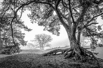 Mistige ochtend in de Soesterduinen von Ron van Ewijk