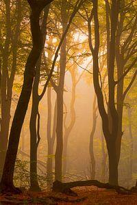 Zonsopkomst in een mistig bos van