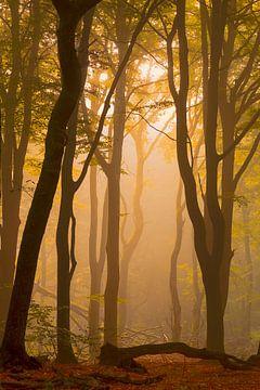 Zonsopkomst in een mistig bos van Arjan van de Logt