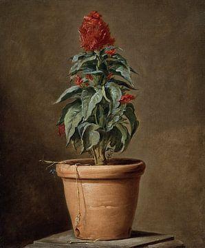 Eine Topfpflanze, Henri-Horace Roland Delaporte