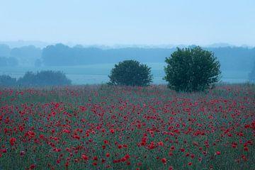 Een prachtig veld vol met klaprozen op een koele zomerochtend. van Jos Pannekoek