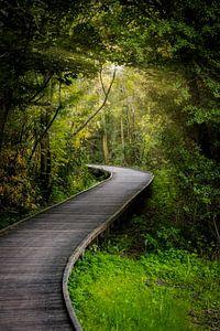 Lostwoods van Zander Proost
