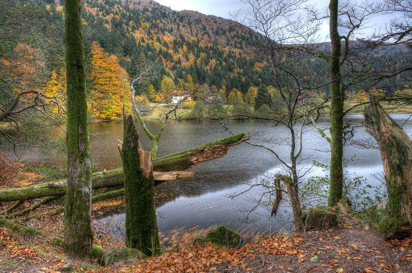 Vosges van Wim Slootweg