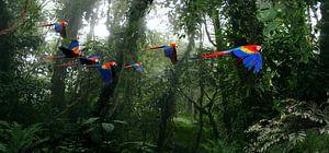 Aras in het oerwoud