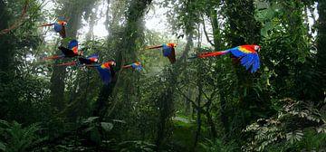 Aras in het oerwoud van Paulus Geeve