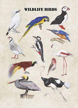 Wildlife birds van Jasper de Ruiter