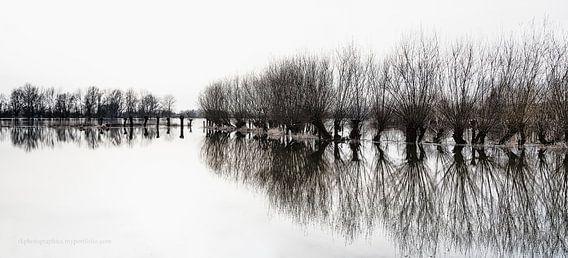 Wilgen bij hoogwater van Ralf Köhnke