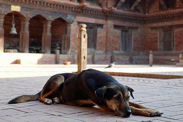 Nepalese hond van Marieke Funke
