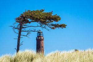 Leuchtturm Darßer Ort mit Baum