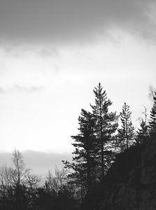 zwart wit dennenboom van Nienke Stegeman