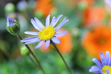 De dromerige bloementuin van Shot it fotografie