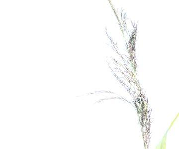 Siergras van Minie Drost