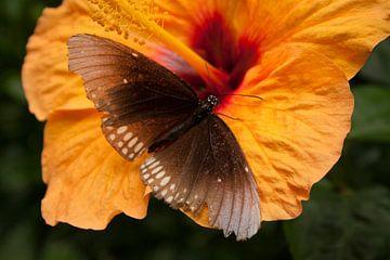 Vlinder vindt bloem von Matty O.H.