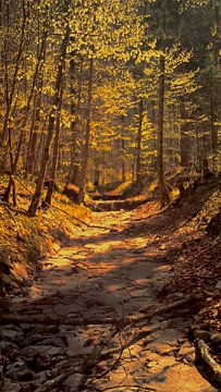 Het gloeiende pad in het bos van ART & DESIGN by Debbie-Lynn