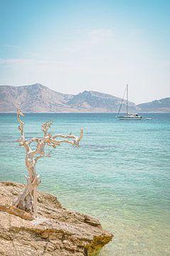 Grieks genieten van Daphne Groeneveld