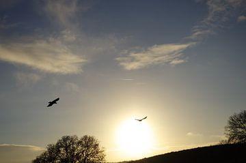 Sky is the limit van Jessey Vrossink