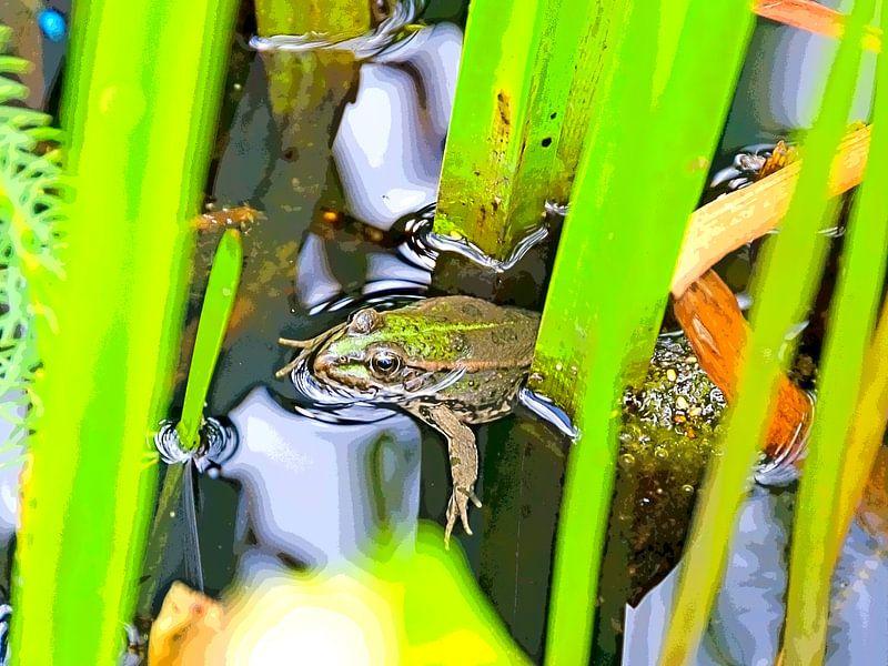 Frosch im Teich von Leopold Brix