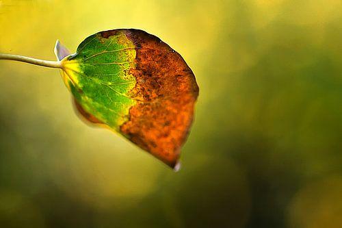 herfstblad van