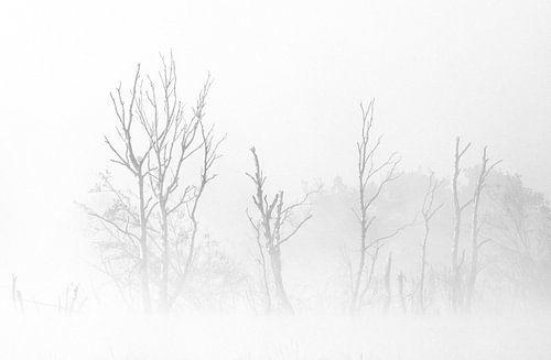 Silhouetten in de mist van