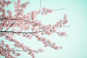 printemps fleuri aux Pays-Bas sur shanine Roosingh