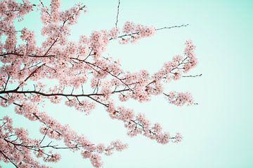 blühender Frühling in den Niederlanden von shanine Roosingh