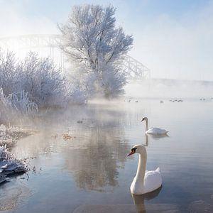 Icy Swan Lake van