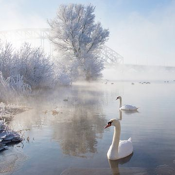 Icy Swan Lake van Edwin van Nuil