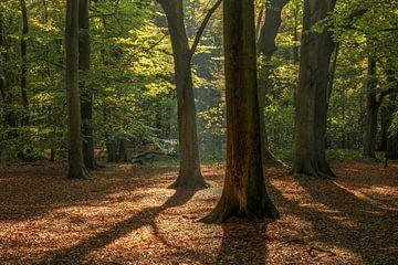 Beukenbos met herfstbladeren ondergrond van FotoBob