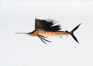 Fisch Serie C von Martino Romijn